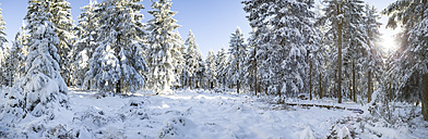 Germany, Thuringia, snow-covered winter forest at morning sunlight - VTF00565