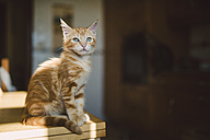 Kitten sitting on table at home - RAEF01589