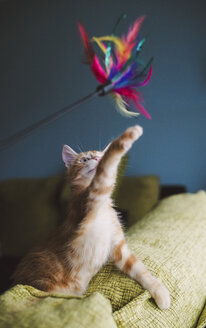 Kitten playing with feather toy - RAEF01592