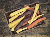 Carrots - LVF05688