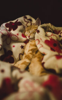 Kitten sleeping on a blanket at home - RAEF01596
