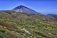 Spain, Tenerife, landscape at Teide National Park - DSGF01338