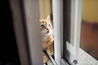 Kitten sitting in between double window - RAEF01599