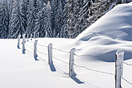 Snow-covered trees and fence - HHF05482
