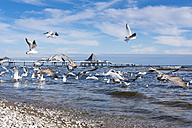 Germany, Usedom, Heringsdorf, seagulls at pier - SIEF07216