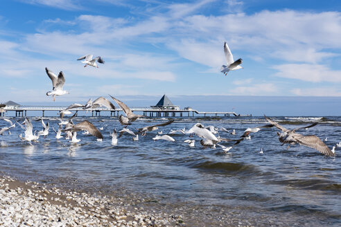 Germany, Usedom, Heringsdorf, seagulls at pier - SIEF07216