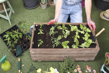 Container with tomatoe plants, pepper plants and lettuce in the urban garden - RTBF00577