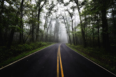 USA, Virginia, empty Blue Ridge Parkway at mist - SMAF00637