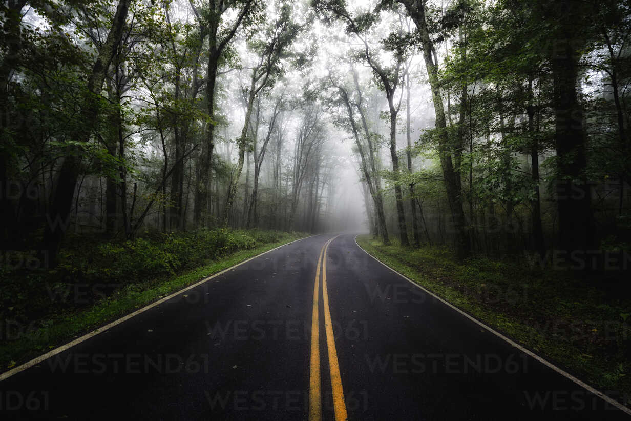 USA, Virginia, empty Blue Ridge Parkway at mist - SMAF00637 - Scott Masterton/Westend61
