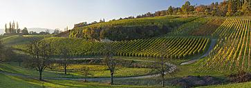 Germany, Ueberlingen, vineyards in autumn - SHF01944