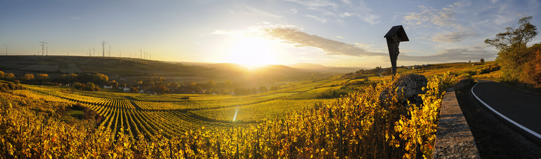 Germany, Rhineland-Palatinate, vineyard in autumn at sunset - BTF00463
