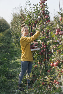 Young woman harvesting apples - KNSF00712
