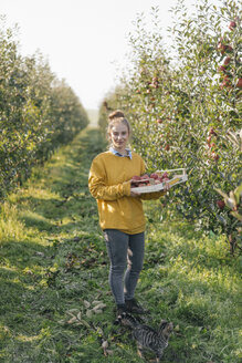 Young woman holding crate with apples in orchard - KNSF00721