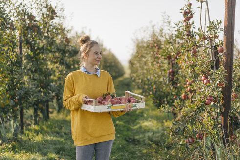 Young woman holding crate with apples in orchard - KNSF00724