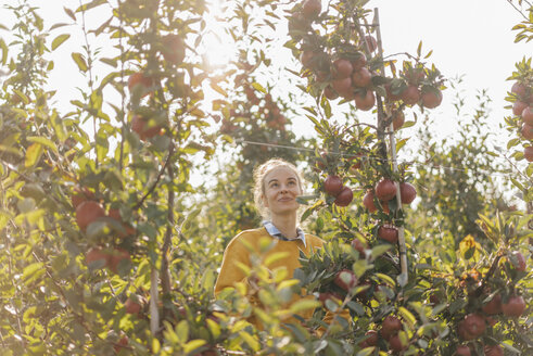 Young woman harvesting apples - KNSF00733