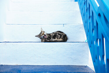 Greece, Milos, Yawning cat lying on stairs - GEMF01314