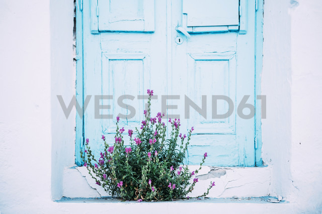 Greece, Milos, Purple flowers in front of blue door - GEMF01317