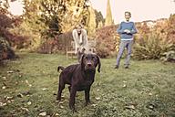 Boy and woman with Labrador Retriever in garden - MFF03397