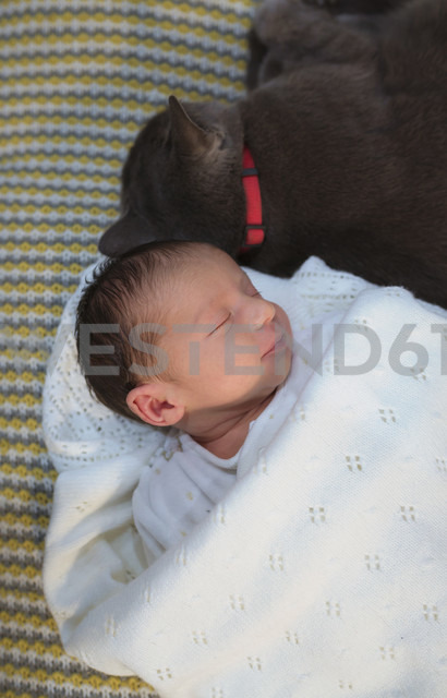 Newborn baby girl sleeping on the couch next to a gray cat - GEMF01350