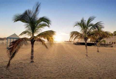 Spain, Tenerife, empty beach with palms at sunset - DHCF00021