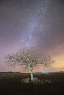 Milky way over a lonely tree - DHCF00024