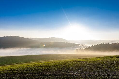 Germany, Baden-Wuerttemberg, Tauberbischofsheim, rural landscape with ground fog - EGBF00164