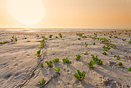 Senegal, Boukote Ouolof, beach with tendrils at sunset - DSGF01403