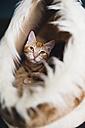 Portrait of sleepy cat - RAEF01639