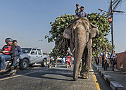 Nepal, Himalaya, Kathmandu, traffic on the road with elephant - ALR00767