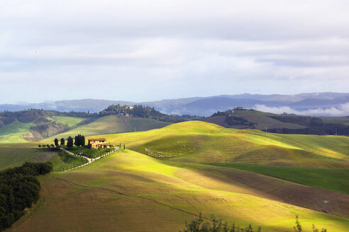 Italy, Tuscany, landscape with flock of sheep - KLR00495