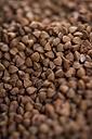 Buckwheat grains, close-up - JUNF00763