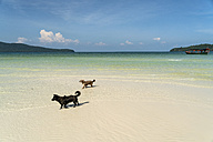 Cambodia, Koh Rong Sanloem, two dogs on the beach of Saracen Bay - PCF00312