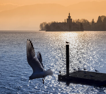 Austria, Salzkammergut, Gmunden, seagull in front of Ort Castle in Traunsee - EJW00828