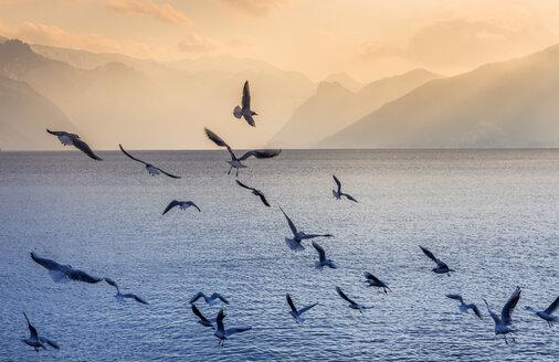 Austria, Salzkammergut, Gmunden, flock of birds at Traunsee - EJWF00831