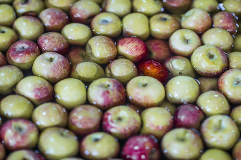 Group of fresh apples in water - ZEF12425