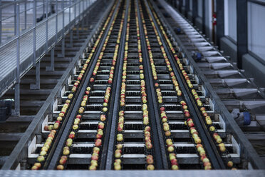 Apples in factory on conveyor belt - ZEF12431