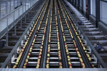 Apples in factory on conveyor belt - ZEF12431