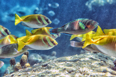 Thailand, Koh Tao, school of fish - DSGF01420