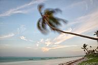 Tanzania, Zanzibar Island, Matemwe Beach, palm trees moved by the wind - DSGF01423
