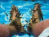 Kangal fishes nibbling man's callused skin at feet - AMF05214