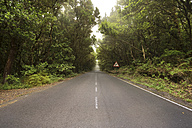 Spain, Canary islands, La Gomera, Misty road through the forest - DHCF00047