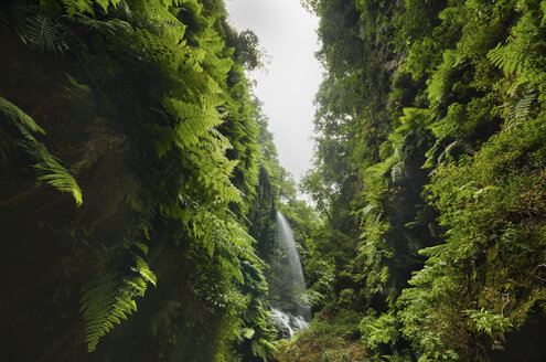 Spain, Canary Islands, La Palma, cascade in tropical forest - DHCF00051