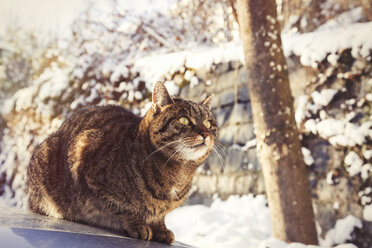 Portrait of tabby cat sitting on motor bonnet in winter - JUNF00780