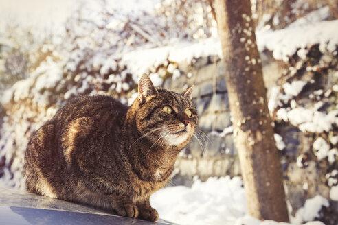 Portrait of tabby cat sitting on motor bonnet in winter - JUNF00780