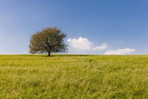Germany, Hesse, single tree in field - EGBF00192