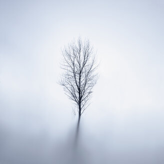 Bare tree standing in lake at wintertime - XCF00130