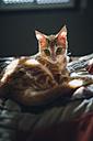 Kitten lying on bed - RAEF01738