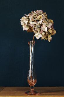 Wilted Hydrangea in vase - TLF00748