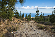 Spain, Tenerife, rural landscape with trees - SIPF01400