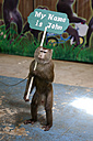 Thailand, Phuket, captured Northern pig-tailed macaque with sign abused as tourist attraction - ZC00496